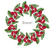Wreath red rowan tree. Ornament twig of rowanberry or ashberry. decorative element circlet leaves and cluster of sorbus berry. Gar. Wreath red rowan tree Royalty Free Stock Photo