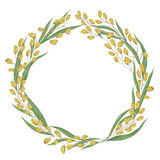 Wreath with rice. Collection grains, leaves and ears of rice on a white background. Stock Photos