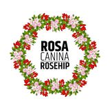 wreath of rose hips. Decorative element with briar ornament royalty free illustration