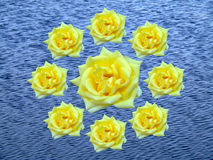 Wreath of roses. Wreath of yellow roses stock photos