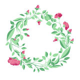 Wreath of roses and branches on a white background Royalty Free Stock Image
