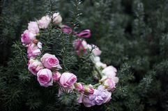 A wreath of roses. For the bride Stock Image