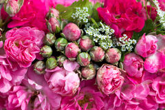 Wreath of roses Stock Photography