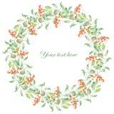 Wreath of rowan Stock Photo