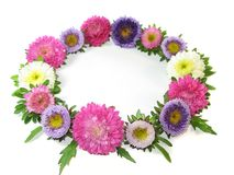 Wreath from small asters Royalty Free Stock Photography