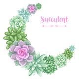 Wreath with succulents. Echeveria, Jade Plant and Donkey Tails.  Stock Photo