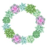 Wreath with succulents. Echeveria, Jade Plant and Donkey Tails.  Royalty Free Stock Photos