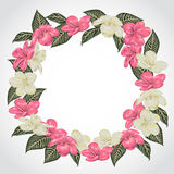 Wreath with tropical plumeria flowers and leaves. Exotic floral botanical background. Stock Photography