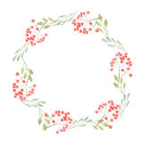 Wreath of twigs and berries. Wreath of twigs, leaves, branches with red berries painted in watercolor on a white background Royalty Free Stock Photography