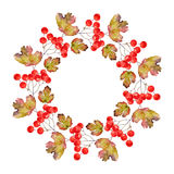 Wreath of viburnum Stock Photos
