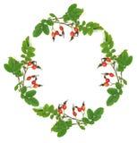 Wreath von einem dogrose Lizenzfreie Stockfotos
