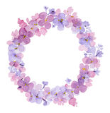 Wreath of watercolor flowers of lilac Stock Images