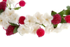 Wreath white flowers cherry and red raspberry Royalty Free Stock Image