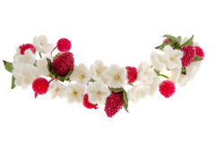 Wreath white flowers cherry and red raspberry Royalty Free Stock Images