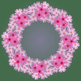 Wreath from white plumeria on a green background Royalty Free Stock Photos