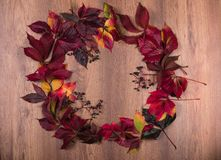 Wreath of wild grape Parthenocissus leaves. Bright decorative wreath of red, yellow and green leaves of wild grapes of partnercissus on a wooden background with stock image