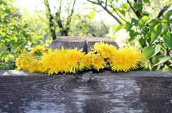 Wreath woven of yellow dandelions. Lies on a wooden fence, a village idyll Royalty Free Stock Photo