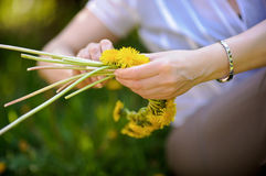 wreath of yellow dandelions in hands royalty free stock image