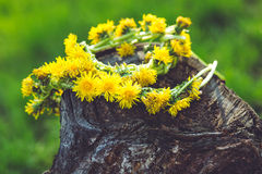 Wreath of yellow dandelions on the old wooden stump. Royalty Free Stock Images