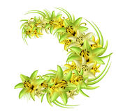 Wreath of yellow-green lilies on a white background. Illustration of summer flowers in watercolor style. Stock Photos