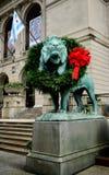 Wreathed Południowy lew obrazy royalty free