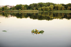Wreaths of wild flowers on the water Stock Image