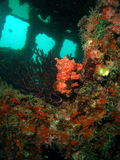 Wreck. Beautiful coral on a wreck off the south Florida coast in 65 ft of water stock image