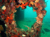 Wreck. Beautiful coral looking thru a port hole on a wreck off the south Florida coast in 65 ft of water stock photography