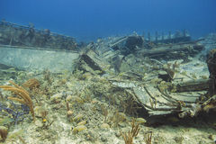 Wreck ecosystem Stock Image