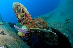 Wreck Hilma Bonaire. Purple sponges growing from the propeller stock images