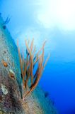 Wreck Hilma Bonaire Stock Images