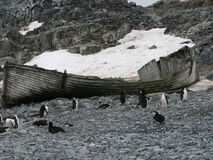 Wreck and penguins on beach Antarctica Royalty Free Stock Photos