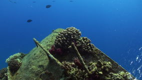 Wreck ship underwater on coral reef Abu Nuhas on blue background in Red sea. Swimming in world of colorful beautiful wildlife of fish and algae. Inhabitants in stock video footage