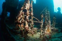 Wreck Victoria Maldives Stock Photo