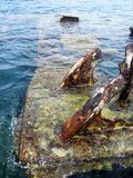 Wreck in the Water Royalty Free Stock Photo