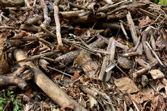 Wreck wood. Wreck caused by natural wood materials Royalty Free Stock Image