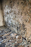 Wrecked home. Interiors of a neglected house in really bad condition  filled with mold and devastation Royalty Free Stock Images