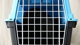 Wrede behandeling van binnenlandse huisdieren Een zwarte kat zit in een kooi in een kinderdagverblijf voor verlaten dieren stock videobeelden