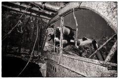 Wrek Diving Stock Photo