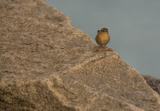 Wren που σκαρφαλώνει σε μια πέτρα Στοκ φωτογραφία με δικαίωμα ελεύθερης χρήσης
