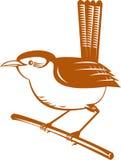 Wren bird Stock Images