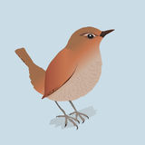 Wren. An illustration of a wren Royalty Free Stock Photography