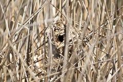 Wren Nest Fotos de archivo libres de regalías