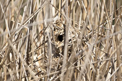 Wren Nest Royalty Free Stock Photos