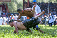 A wrestler takes control of his battle during competition at the Kirkpinar Turkish Oil Wrestling Festival in Edirne in Turkey. Royalty Free Stock Image