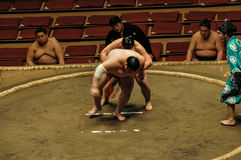 Wrestlers in the Grand Sumo Tournament in Tokyo Royalty Free Stock Photo
