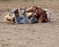 Wrestling Steers Stock Image