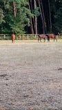 Wretham konia padok obraz stock
