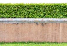 Wrightia trees on wall Royalty Free Stock Image