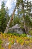 wrights de région sauvage de lac Photo libre de droits